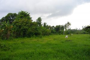 Front View-Foreclosed Vacant Lot For Sale In Candelaria, Quezon Province (AN-0283114)