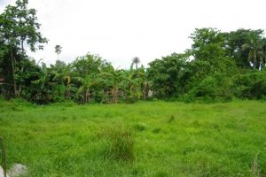 Front View-Foreclosed Vacant Lot For Sale In Candelaria, Quezon Province (AN-0283185)