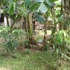 Front View-Foreclosed Vacant Lot For Sale In Candelaria, Quezon Province (AN-0319222)