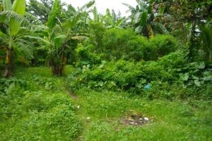 Front View-Foreclosed Vacant Lot For Sale In Candelaria, Quezon Province (AN-0330787)