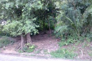Front View-Foreclosed Vacant Lot For Sale In Solano, Nueva Vizcaya (AN-0659752)