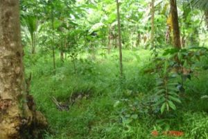 Front View-Foreclosed Vacant Lot For Sale In Sultan Kudarat, Maguindanao (AN-0945473)