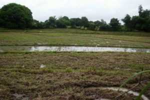 Front View-Foreclosed Vacant Lot For Sale In Balungao, Pangasinan (AN-0955449)