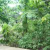 Front View-Foreclosed Vacant Lot For Sale In Limay, Bataan (AN-1447956)