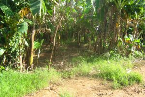Front View-Foreclosed Vacant Lot For Sale In Mariveles, Bataan (AN-2021912)
