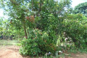 Front View-Foreclosed Vacant Lot For Sale In Mariveles, Bataan (AN-2215507)